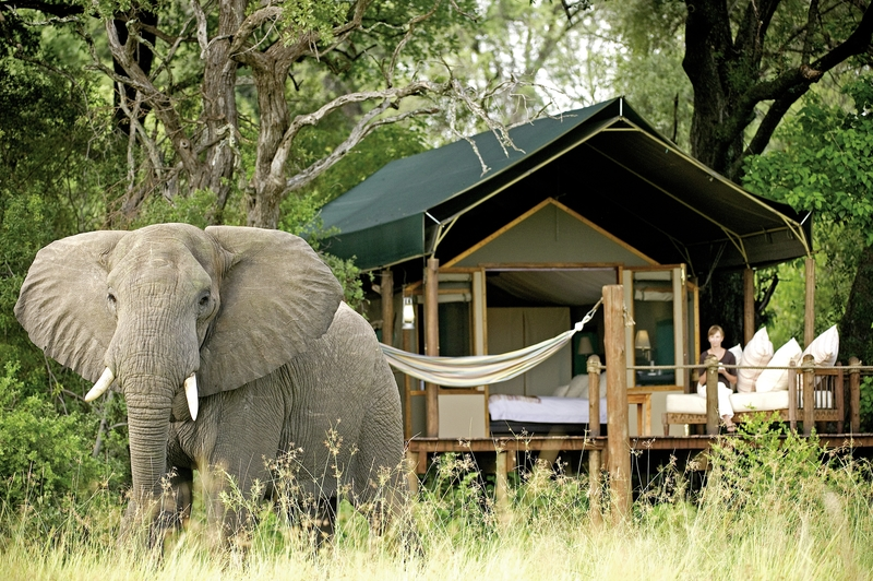 Sanctuary Stanley´s Camp Tiere