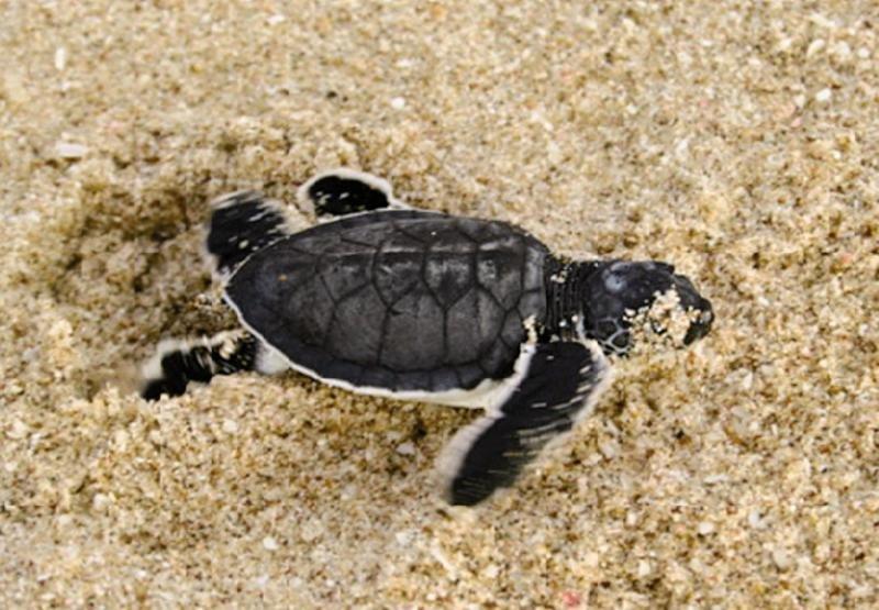 Ras al Jinz Turtle Reserve Tiere