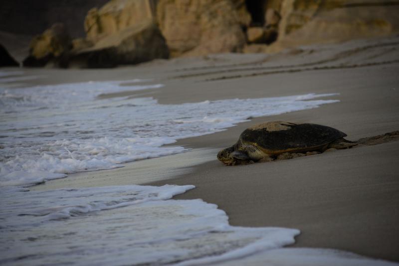 Ras al Jinz Turtle Reserve Wohnbeispiel